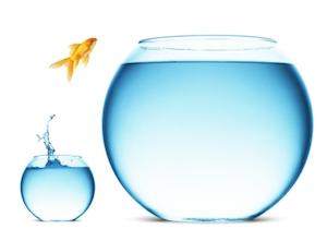 Goldfish-Ambition.jpg